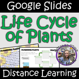 Distance Learning: Life Cycle of Plants (Google Slides)