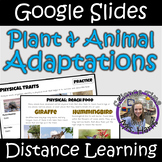 Distance Learning: Plant and Animal Adaptations (Google Slides)