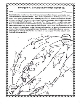 convergent evolution worksheet - Evolution Worksheet
