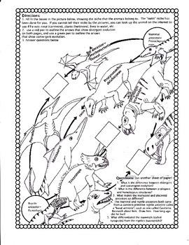 Divergent vs. Convergent Evolution Worksheet
