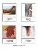Diverse Human Body Part 3-Part Cards