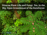 Diverse Plant Life & Fungi in the Big, Open Greenhouse of the Rainforest PDF