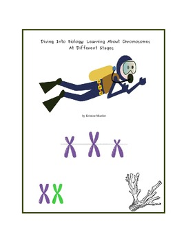 Diving into Biology: Learning About Chromosomes at Different Stages