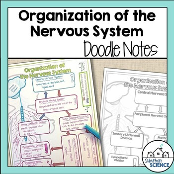 Divisions of the Nervous System Doodle Notes