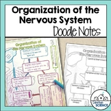 Divisions of the Nervous System Illustrated Notes
