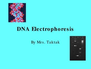DNA Electrophoresis Ppt