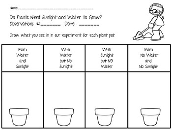 Do Plants Need Sunlight and Water:  Student Lab Activity (NGSS 2-LS2-1)