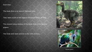 Dodo Bird - Extinct - Power Point facts history information pictures