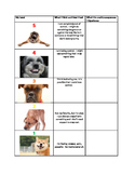 Dog 5 point scale and calm down plan
