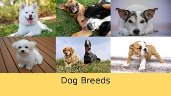 Dog Breeds Lesson