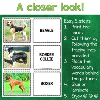 Dog Breeds Photo Flash Cards