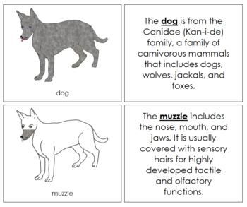 Dog Nomenclature Book