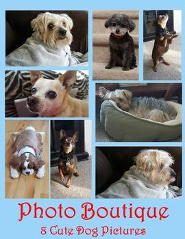 Dog Photographs!