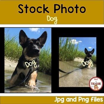 Dog Stock Photos- Animals