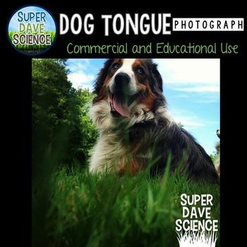 Dog Tongue Photograph