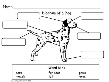 Dogs, Writing Activities, Graphic Organizers, Diagram