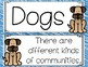 Dogs Focus Wall Journeys 2nd Grade