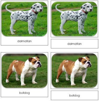 Dogs Safari Toob Cards - Montessori