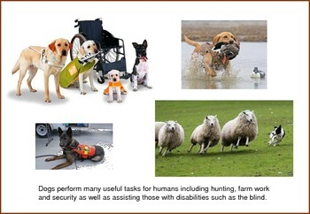 Dogs Teaching Posters/Flash Cards