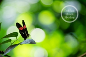 Dollar Stock Photo 10 Butterfly