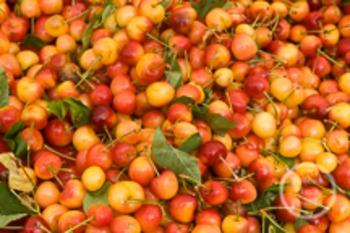 Dollar Stock Photo 114 Yellow Cherries