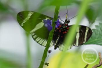 Dollar Stock Photo 118 Butterfly Proboscis
