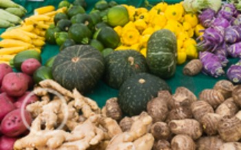 Dollar Stock Photo 137 Squash and Root Vegetables