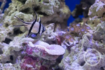 Dollar Stock Photo 149 Black and White Fish in Tank