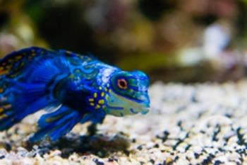 Dollar Stock Photo 150 Blue Fish
