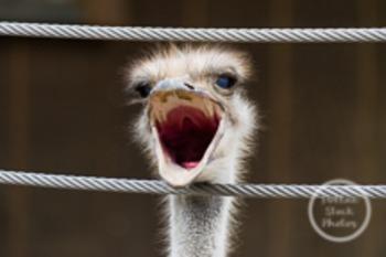 Dollar Stock Photo 151 Ostrich Scream
