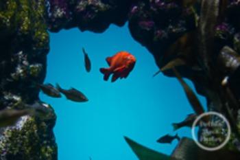 Dollar Stock Photo 154 Orange Fish Swimming Through Rocks