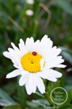 Dollar Stock Photo 164 Ladybug on Daisy