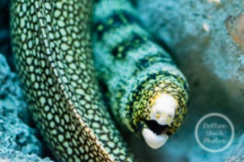 Dollar Stock Photo 168 Eel