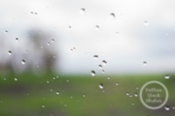 Dollar Stock Photo 181 Rain Drops Wide