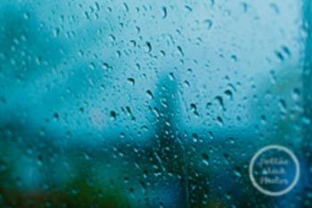 Dollar Stock Photo 195 Raindrops on a Window