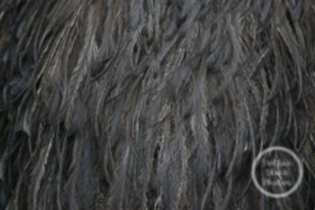 Dollar Stock Photo 23 Texture: Feathers