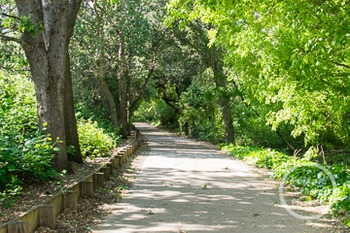 Dollar Stock Photo 236 Path through the Trees