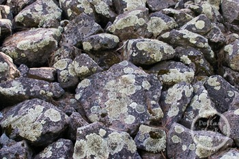 Dollar Stock Photo 238 Rock with Lichen