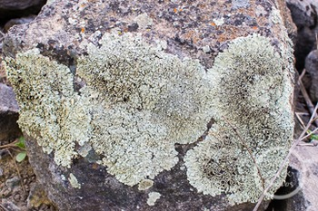 Dollar Stock Photo 239 Rock with Lichen Close Up