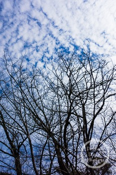 Dollar Stock Photo 243 Clouds and Trees