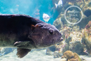 Dollar Stock Photo 266 Fish in Tank