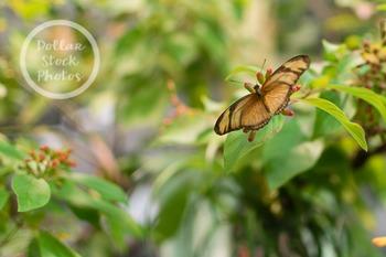 Dollar Stock Photo 268 Butterfly on a Bush