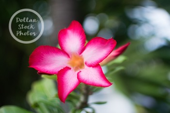 Dollar Stock Photo 296 Tropical Flower