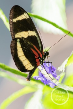 Dollar Stock Photo 310 Butterfly Close Up