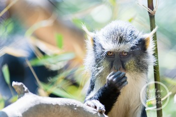 Dollar Stock Photo 320 Monkey Eating