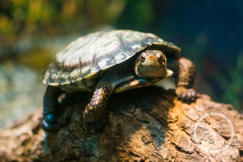 Dollar Stock Photo 323 Turtle