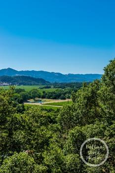 Dollar Stock Photo 349 Napa Valley Tall