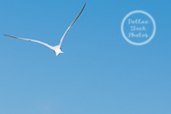 Dollar Stock Photo 40 Bird Flying Blue Sky