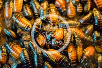 Dollar Stock Photo 441 Cockroaches