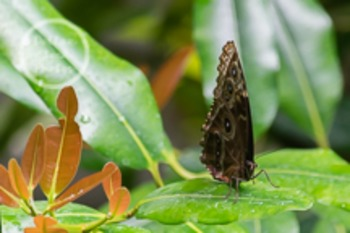 Dollar Stock Photo 49 Brown Butterfly